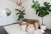 Cozy seating area with natural wood pedestals and large indoor plants.