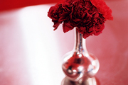 A vase of red flowers on a red tabletop