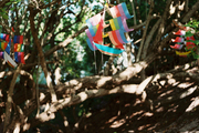 Kites hung in the trees