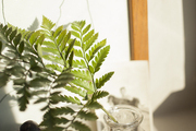 A single branch of greenery in a vintage glass vessel decorates a windowsill.