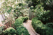 A gravel pathway lined with boxwood