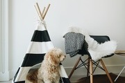 A black and white dog teepee.