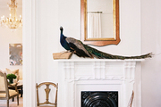 A stuffed peacock beside a wood-frame mirror on a white mantel