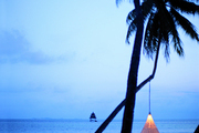 A resin hanging chair from Dedon suspended from a palm tree