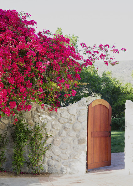 Begron Undangan further 425027283563397356 additionally Shabby Chic Kitchen Decor together with Bougainvillea additionally 35145. on pink bathroom design ideas