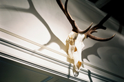 A set of antlers hung from a doorway
