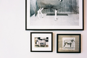 Framed horse portraits above a rack of antlers