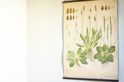 A vintage botanical print hangs near a wooden desk