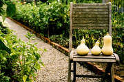 Squash and a wooden chair on a gravel path in a garden
