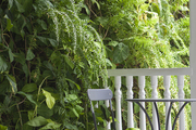 A bistro table on a balcony overlooking a wall of hanging plants.