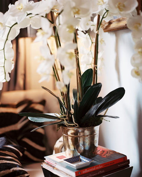 Potted Orchid Photos Design Ideas Remodel And Decor