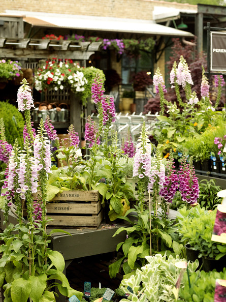 Retail Store Design - A grouping of potted foxgloves