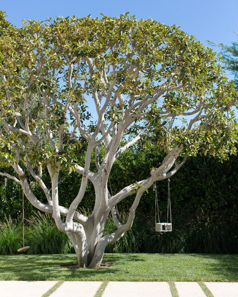 Tree Swing Photos, Design, Ideas, Remodel, and Decor - Lonny
