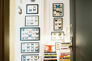 A collection of framed butterflies hung in a hallway