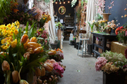 Bunches of tulips and daffodils in a floral studio