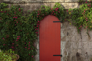 A red door embellished with flowering vines