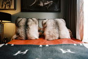 Fur throw pillows and orange bedding topped with a gray blanket in a bedroom