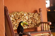 A toucan perches atop the arm of an antique chair in the red walled foyer of Hotel Santa Clara.