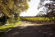 A vineyard-flanked driveway in the Napa Valley