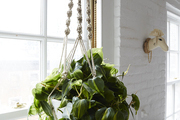 A crochet rope holds a hanging verdant plant