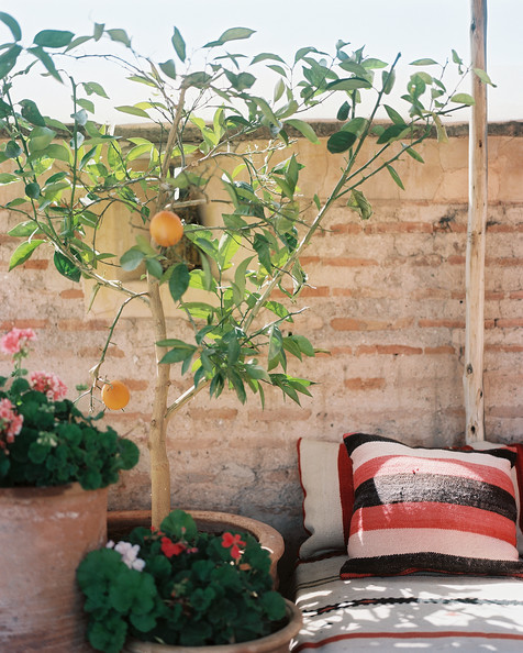 Moroccan Patio Photos (11 of 32)