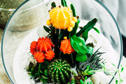 A plant arrangement is found here in a glass bowl.