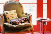 Lilah, a dachshund, napping on a green chair