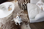A dog on a cowhide rug with upholstered seating and a low coffee table