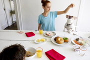 A breakfast table with bagels, brightly colored napkins, and a dog