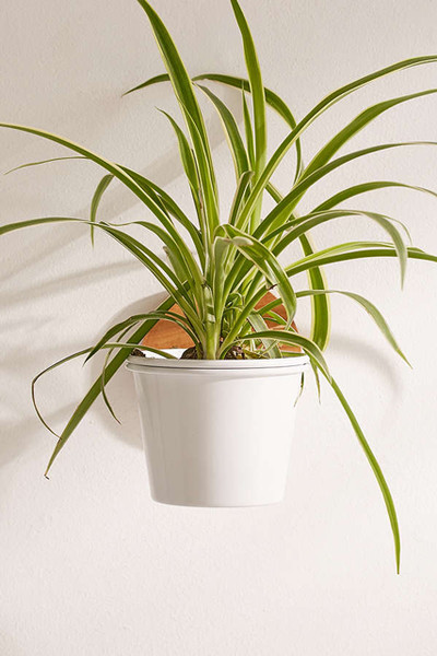 Urban Outfitters Single Herb Wall Planter