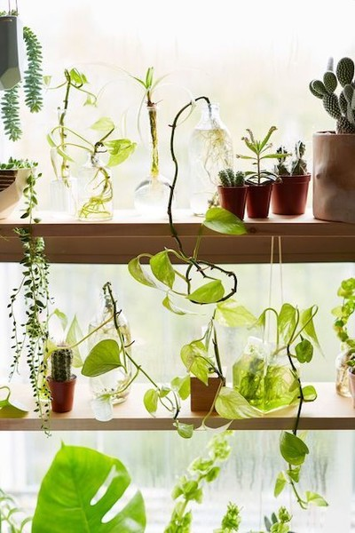 Greenhouse Style