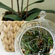 Grounded Terrarium