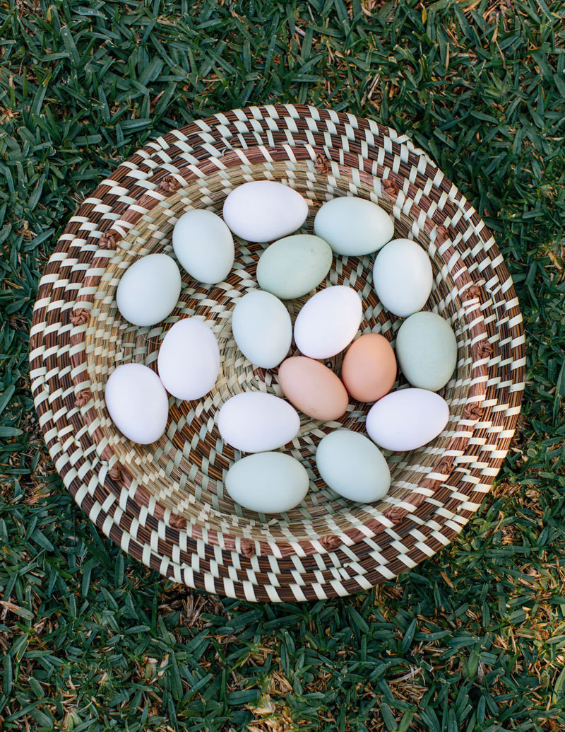 Fresh-laid eggs from Thiessen's chicken coop.