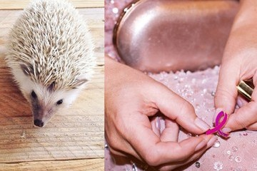 Links We Love: Superyachts, Skull Sculptures, and Perhaps the Cutest Pet Ever