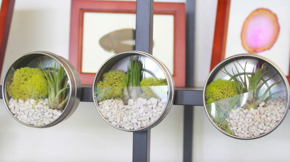 video diy terrarium magnets you can make in a few minutes do it yourself projects lonny. Black Bedroom Furniture Sets. Home Design Ideas