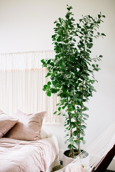 Spring Cleaning Task #15: Wipe Off Plant Leaves