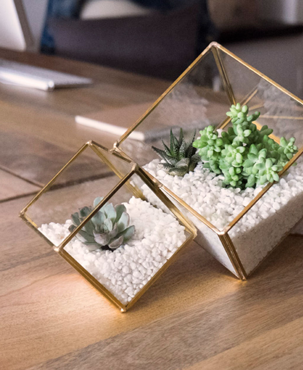 West Elm's gold faceted terrariums hold low maintenance succulents, perfect for an office space.