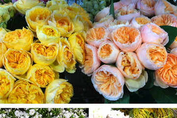 """How the Flower Market Made Me a """"Morning Person"""""""