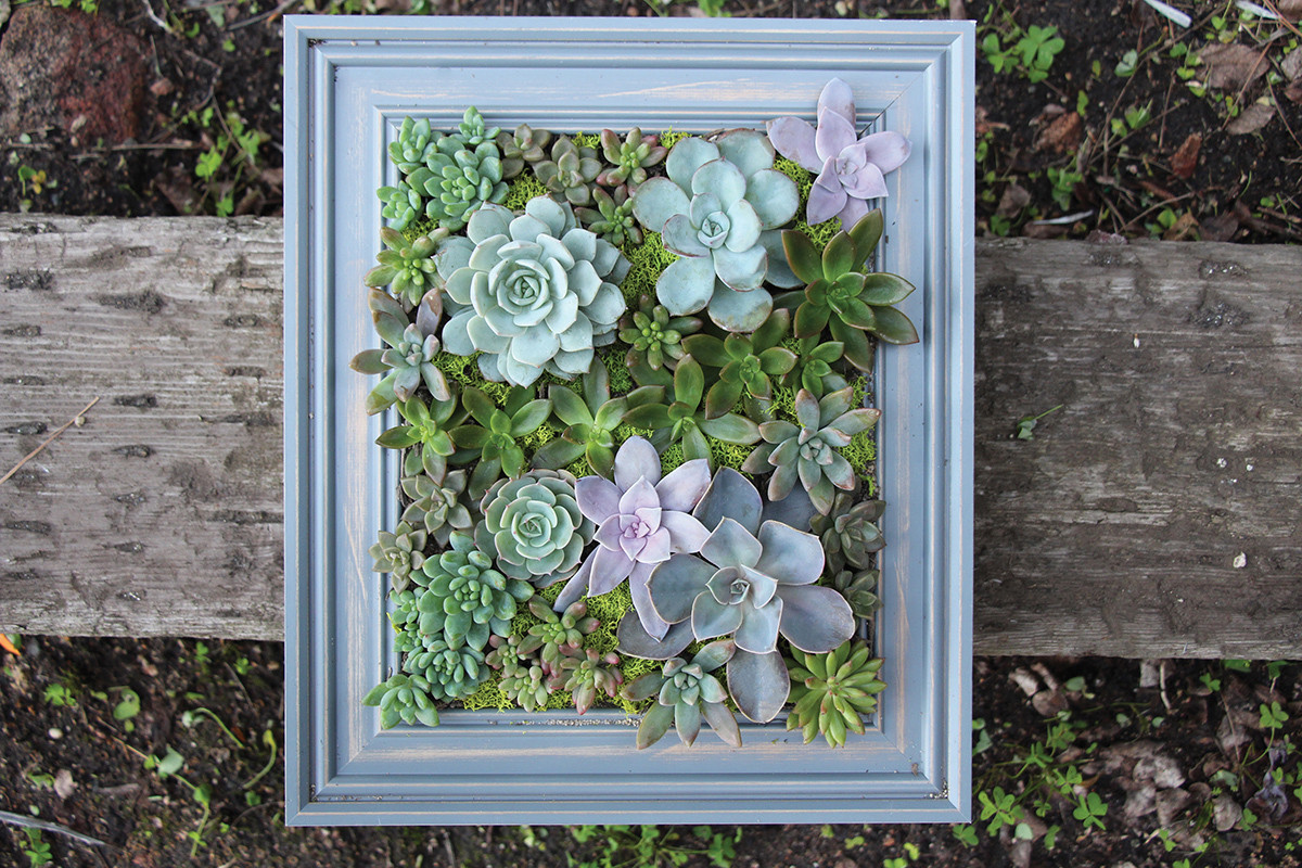 diy a framed succulent wall planter