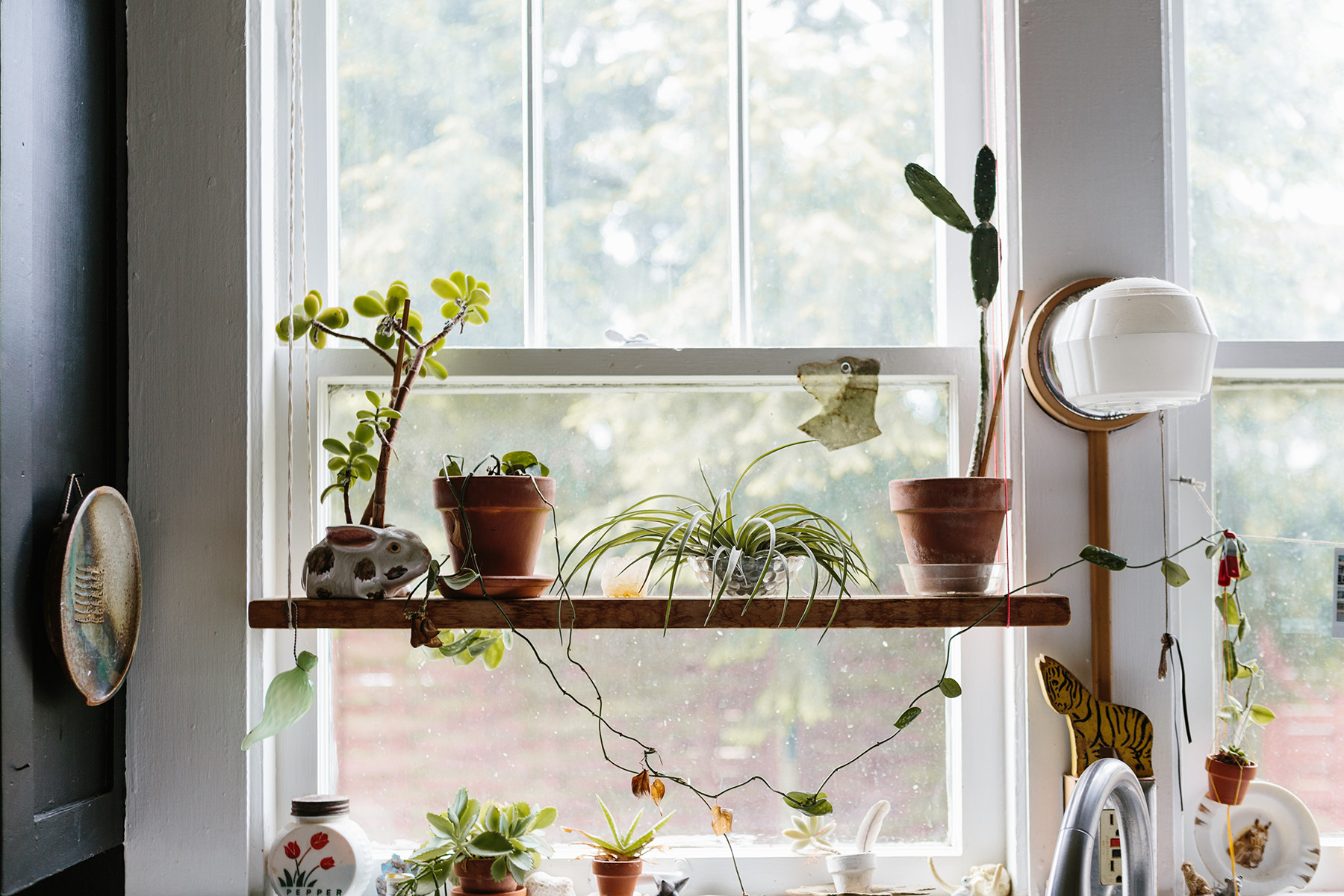 Why Are We So Obsessed With Plants, Anyway?