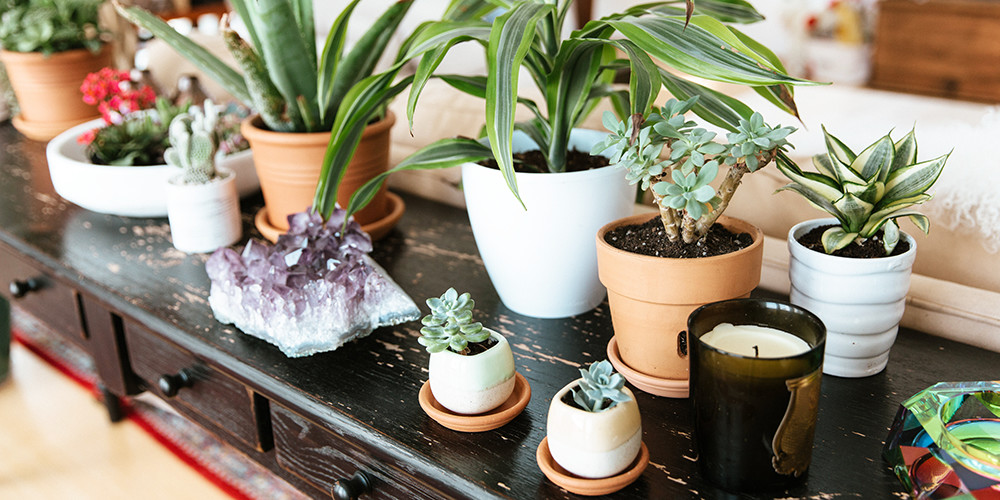 Pinterest Says This Plant Is The New Succulent