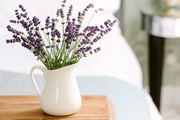 How Do I Keep A Lavender Plant Alive — The Beautiful Flower Isn't High Maintenance