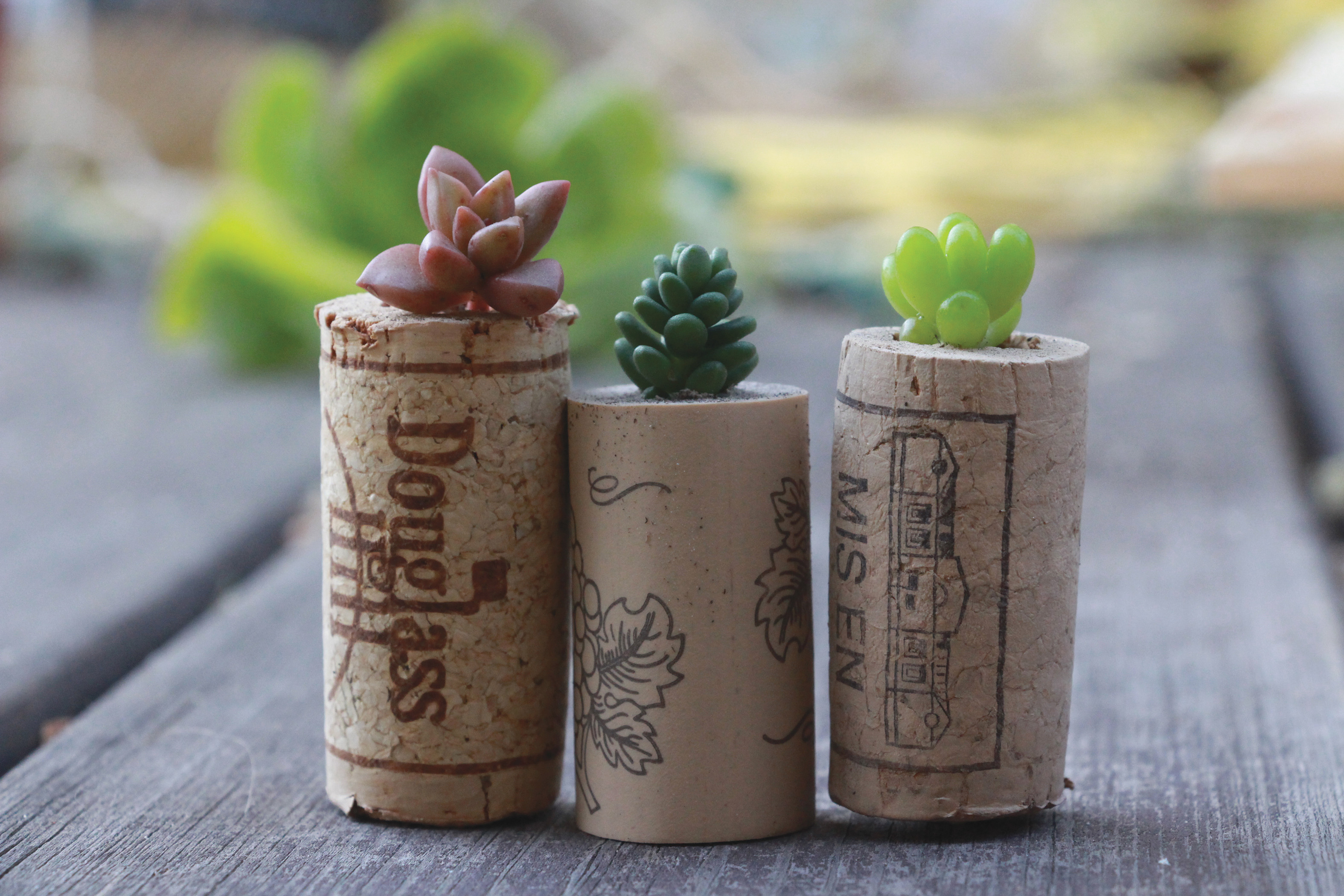 Diy succulent wine cork planters do it yourself projects lonny diy succulent wine cork planters solutioingenieria Image collections