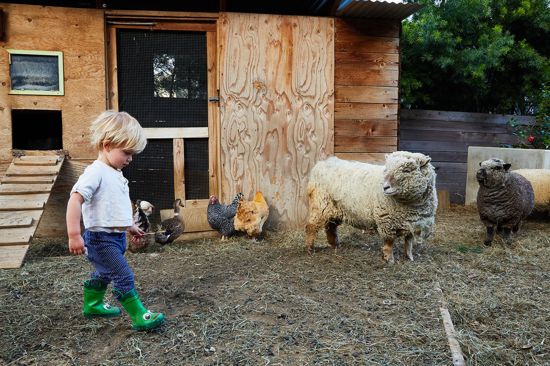 After moving in, the family inherited a hen house — a space now home to a growing brood of barnyard friends.