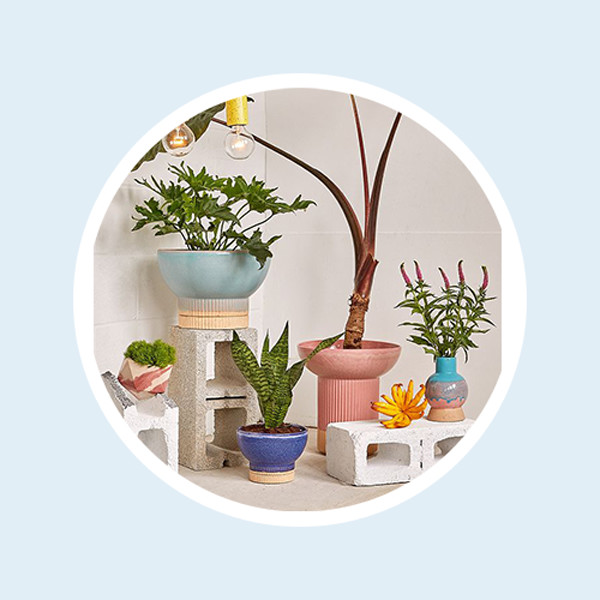 12 Necessities Every Plant Mom Needs