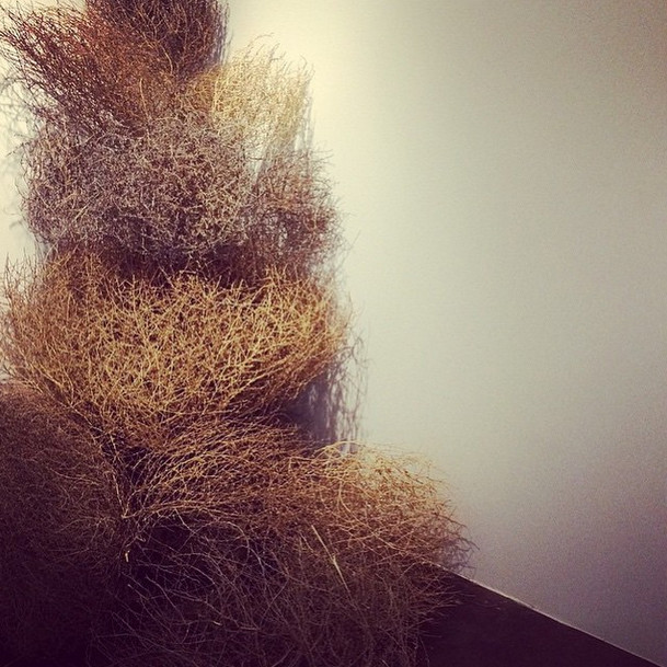 Are Tumbleweeds the New Taxidermy?