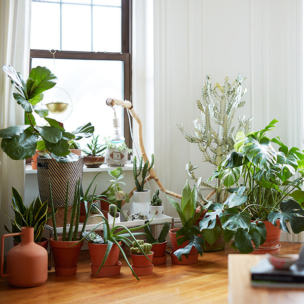 A Maximalist's Survival Guide To Small Space Living