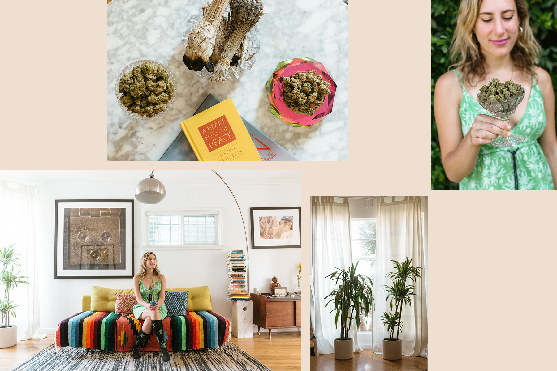 Weed Industry Women & Their Favorite Houseplants