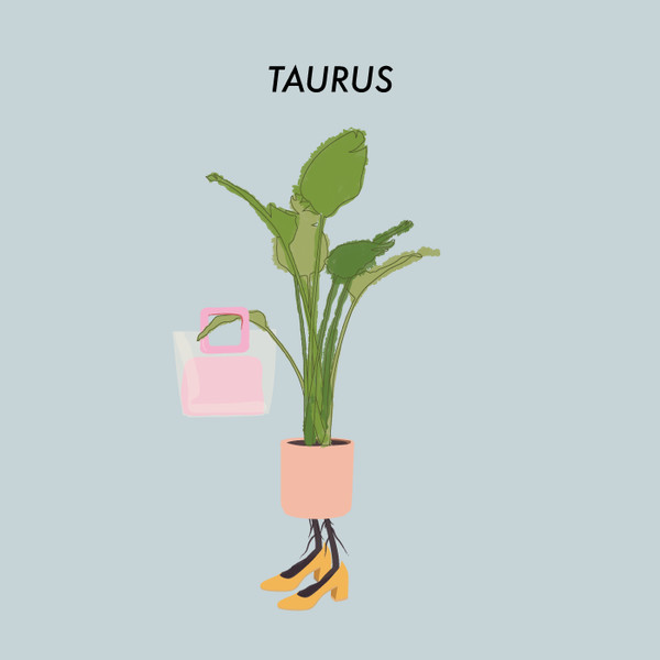 Taurus: Bird Of Paradise - The Best Houseplant For You Based ... on