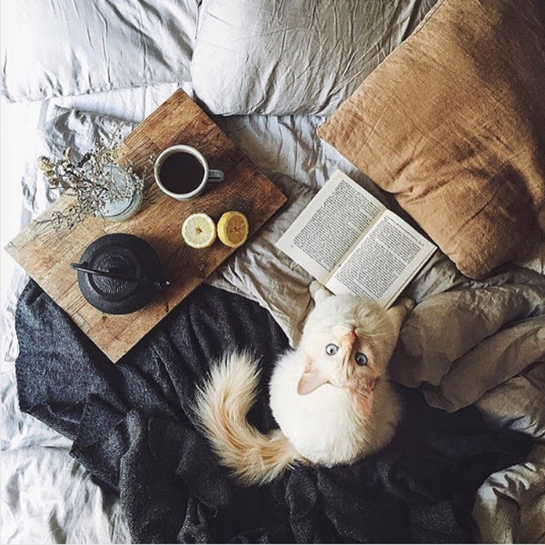 Hygge Haul 15 Times Cats Stole The Home Shoot Lonny
